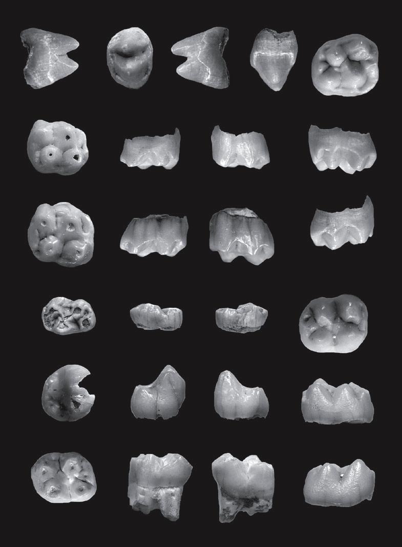 فسیل دندان ها